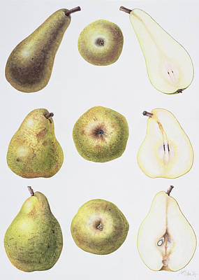 Food And Beverage Drawing - Six Pears by Margaret Ann Eden