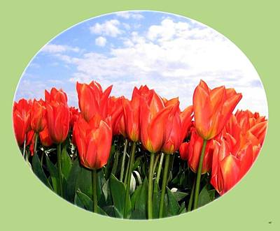 Skagit Valley Tulips 1 Print by Will Borden