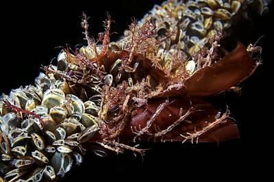 Skeleton Shrimp And Mussels Print by Alexander Semenov