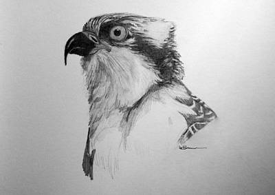 Osprey Drawing - Sketch Of An Osprey by Leslie M Browning