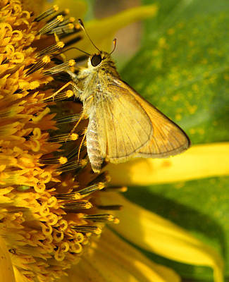 Skipper And Sunflower Print by Sandi OReilly