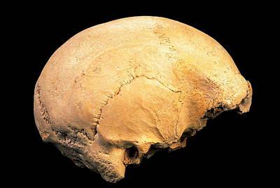 Skull 4, Sima De Los Huesos Print by Javier Truebamsf