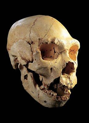 Skull 5, Sima De Los Huesos Print by Javier Truebamsf
