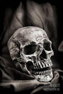 Human Head Photograph - Skull by HD Connelly