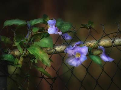 Photograph - Skyflower by Brenda Bryant
