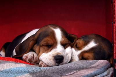 Sleeping Beauties Print by Getty images