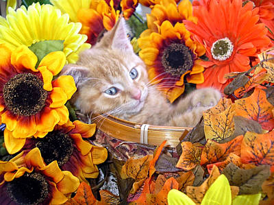 Sleepy Kitty Cat In A Fall Flower Basket With Gerbera Daisies And Autumn Sunflowers Looking Out Print by Chantal PhotoPix