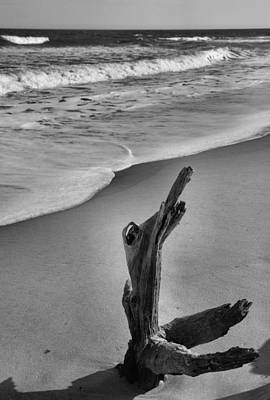 Snag And Surf Print by Steven Ainsworth