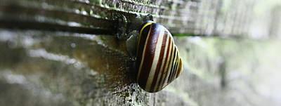 Snail Print by Photography Art