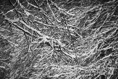 snow coating on tree branches on a cold snowy winters day Belfast Northern Ireland Print by Joe Fox