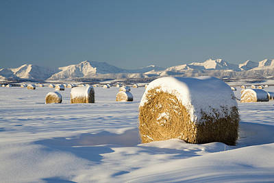 Snow-covered Hay Bales Okotoks Print by Michael Interisano