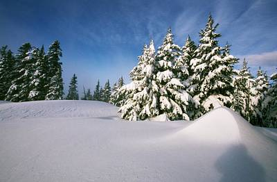 Snow Covered Trees In The Oregon Print by Natural Selection Craig Tuttle