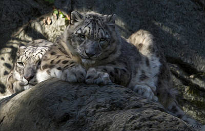 Photograph - Snow Leopard Duo by Stephen EIS
