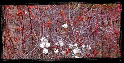 Snowberries And Rosehips Print by Will Borden