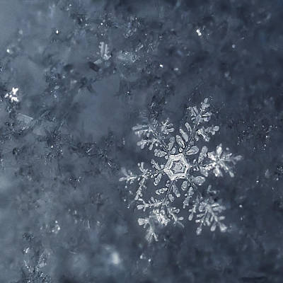 Winter Landscapes Photograph - Snowflake In Blue by Beth Riser