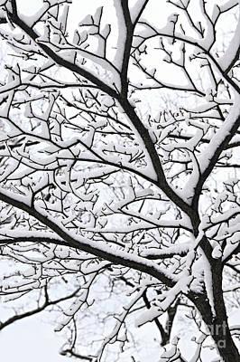 Snowy Branch Print by Elena Elisseeva