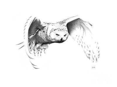 Snowy Owl Print by Bryan Knudsen