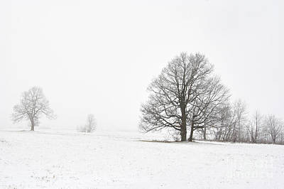 Snowy Winter Landscape With Trees Print by Michal Boubin