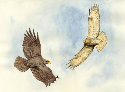 Buzzard Painting - Soaring Buzzards by Chris Pendleton