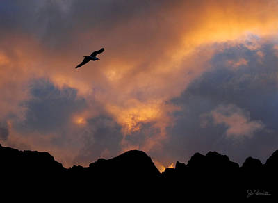 Soaring In The Midnight Sun Print by Joe Bonita