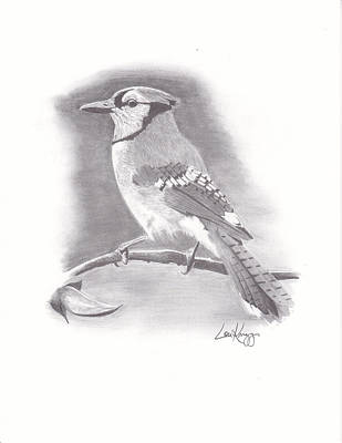 Bluejay Drawing - Solitary Jay by Lou Knapp
