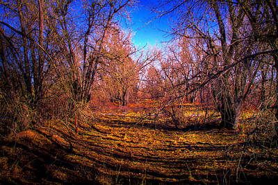 South Platte Park IIi Print by David Patterson
