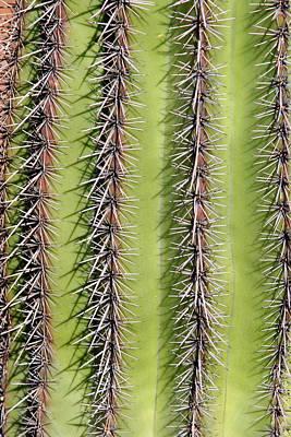 Southwest Art Photograph - Southwest Saguaro Cactus Close-up  Vertical by James BO  Insogna