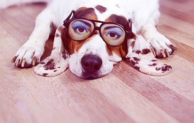 Spanish Hound Dog Lying With Joke Glasses Print by Retales Botijero