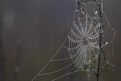 Web Of Life Photograph - Spider Web Covered In Dew Drops by Robert Postma