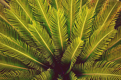 Floral Photograph - Spiked Leaves by Sumit Mehndiratta