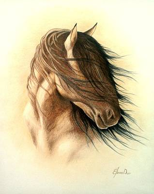 Wild Horse Drawing - Spirit by Lena Day