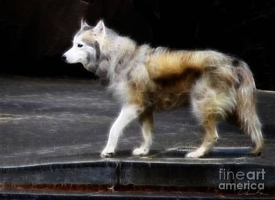Purebred Digital Art - Spirit Wolf by Danuta Bennett