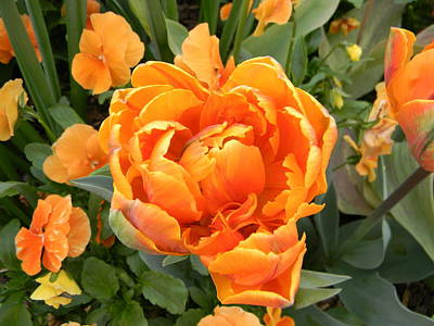 Washington Dc Photograph - Splash Of Orange by Ashley Arents