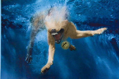 Diving Dog Photograph - Splashdown 2 by Jill Reger