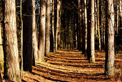 Spnc Tunnel Of Trees Print by LeeAnn McLaneGoetz McLaneGoetzStudioLLCcom