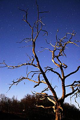 Moonlit Night Photograph - Spooky Tree by Larry Ricker