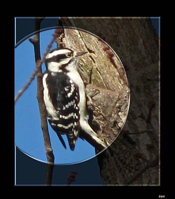 Woodpecker Mixed Media - Spot Lite Woodpecker by Debra     Vatalaro