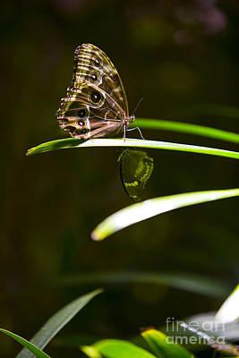 Leda Photograph - Spotted Beauty by Leslie Leda