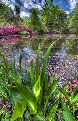Spring At Magnolia Plantation - Charleston Sc Print by Drew Castelhano