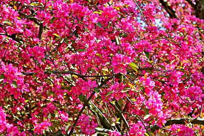 Spring Blossom Print by Felix Zapata