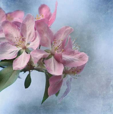 Garden Flowers Photograph - Spring Blossoms For The Cure by Kim Hojnacki