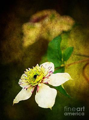 Spring Charm Print by Darren Fisher