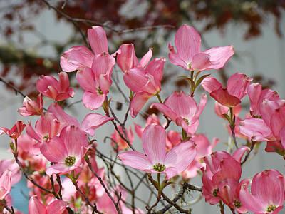 Spring Dogwood Tree Flowers Art Prints Pink Flowering Tree Print by Baslee Troutman