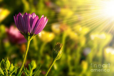 Flower Photograph - Spring Flower by Carlos Caetano