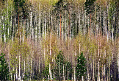 Spring Forest Lace Print by Vladimir Kholostykh