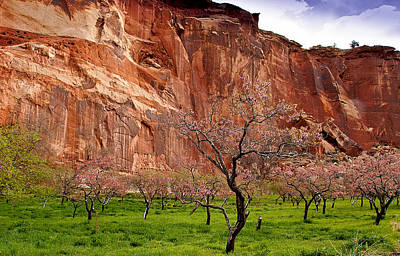 Wild Orchards Photograph - Spring In Utah by Jean Noren
