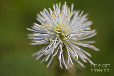 Leda Photograph - Springtime  by Leslie Leda