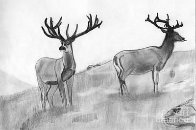 Shashi Kumar Drawing - Stag by Shashi Kumar