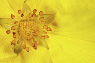 Stamen Print by Billy Currie Photography