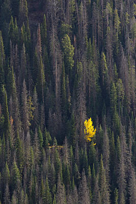 Yellowstone Photograph - Stand Out by Twenty Two North Photography